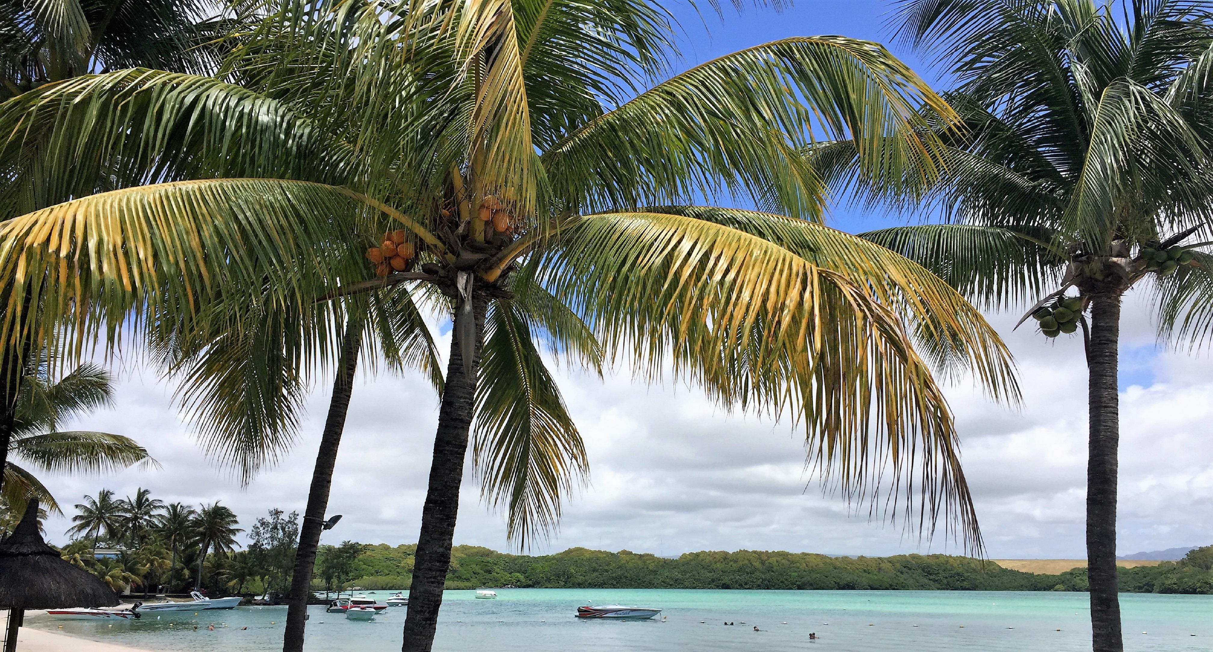 Strand unter Palmen Mauritius