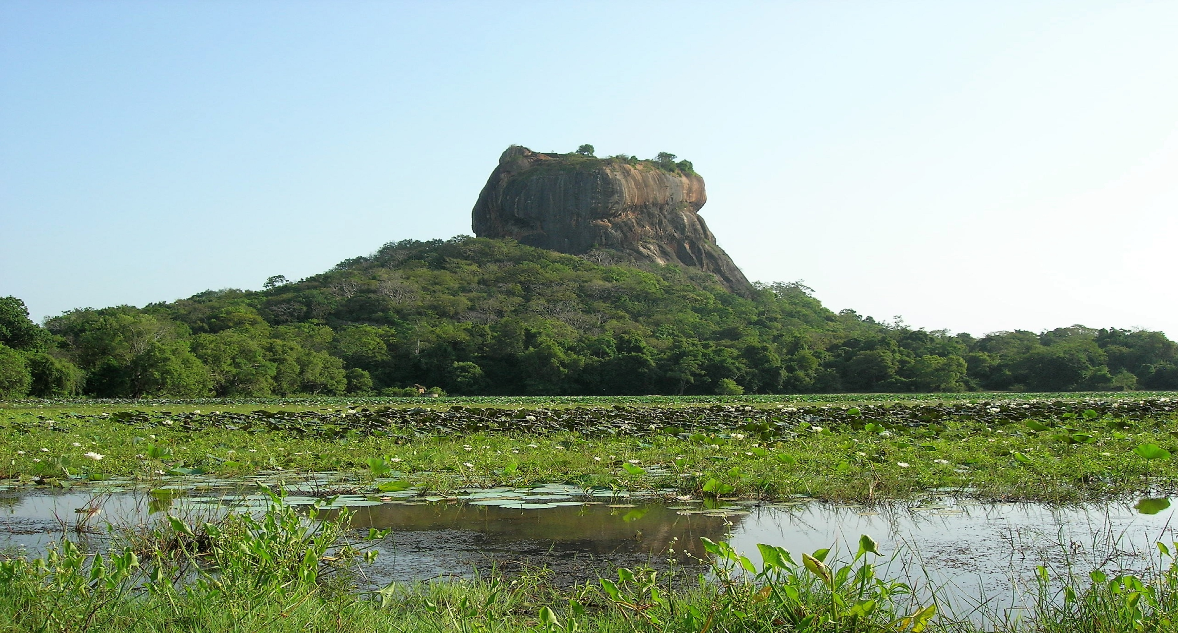 Löwenfelsen Sri Lanka