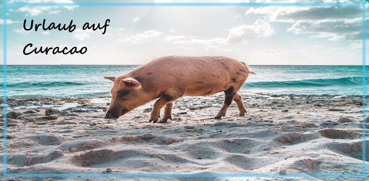 dein-urlaubsdeal.de Curacao Urlaub günstig buchen-min